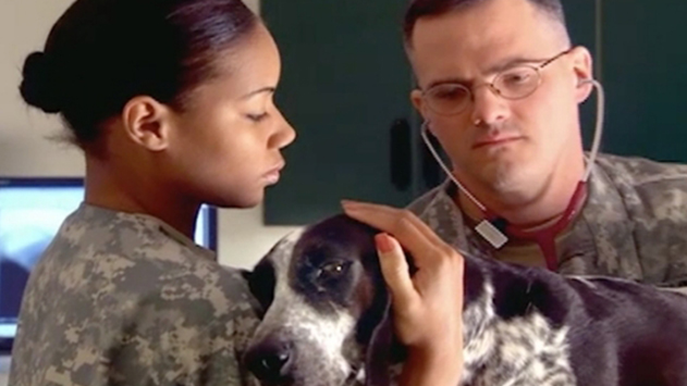 Caring for the Army dogs who support our Soldiers.