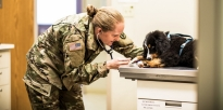 U.S. Army animal care specialist examines a pet